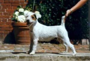 rednock-daisy-dog24