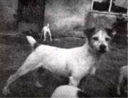 rednock-foxwaren-Contessa