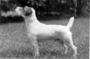 rednock-foxwarren-digger