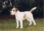 rednock-nette-ninifee